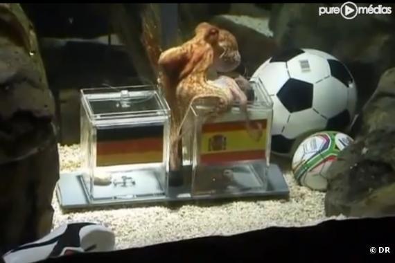 Paul, le poulpe