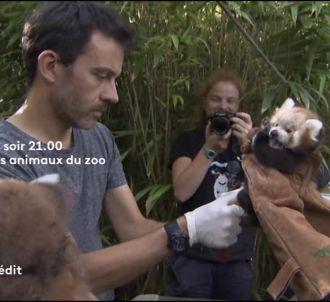 'Les animaux du zoo'
