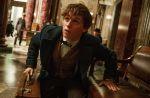 """Box-office : """"Les Animaux fantastiques"""" démarre fort, le Palmashow passe le million"""