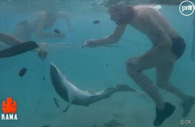 Cette saison, un requin pris au piège a eu la vie sauve