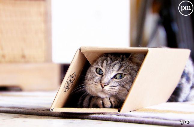 """""""La vie secrète des chats"""""""