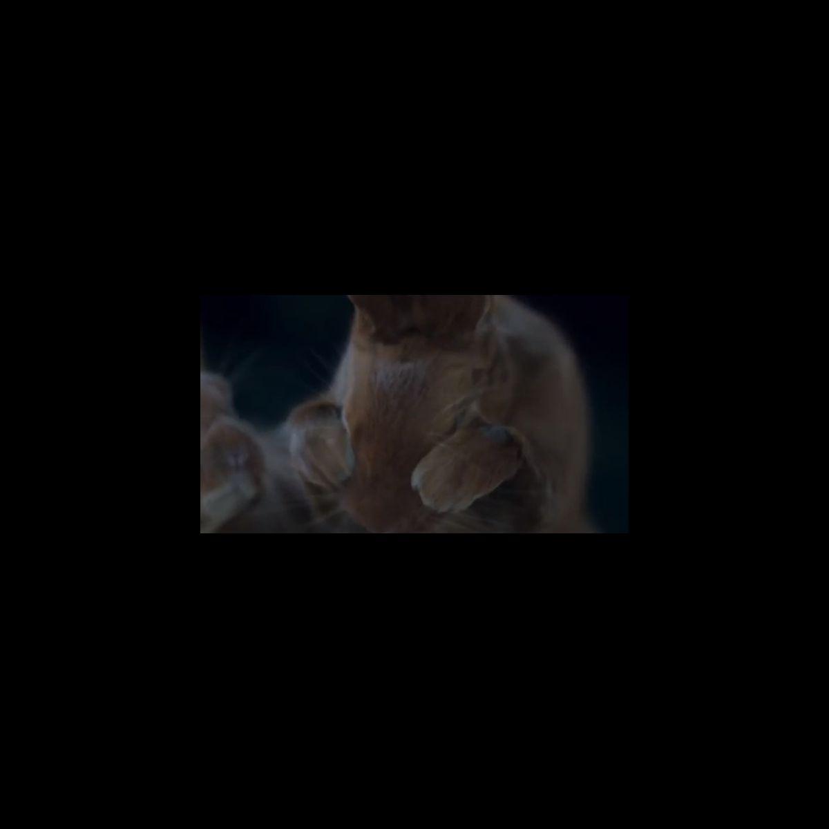 Apr s l 39 ours canal met en sc ne un lapin dans sa nouvelle publicit puremedias - Sonia mabrouk en couple ...