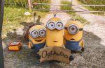 """""""Les Minions"""" : Vers un démarrage supérieur à """"Toy Story 3"""" aux Etats-Unis ?"""