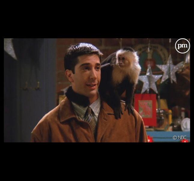 """Le tournage de la série """"Friends"""" avec le capucin Marcel a été très difficile"""