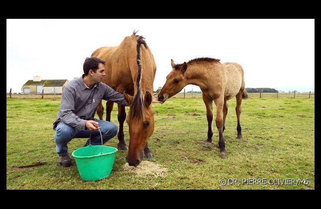"""Thomas de """"L'Amour est dans le pré"""" dément avoir laissé agoniser son cheval"""