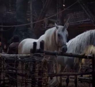 'Les Licornes' selon Canal+