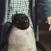 John Lewis : Un pingouin héros de son émouvante pub de Noël