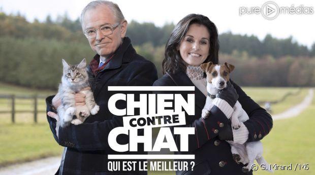 """""""Chien contre chat : qui est le meilleur ?"""""""