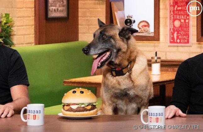 """Burger Quiz"""