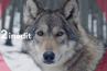 """""""Le plus beau pays du monde"""" : France 2 lance sa nouvelle case de docs animaliers ce soir"""