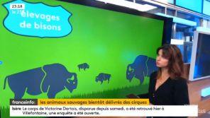 Bien-être animal : Quand franceinfo: confond visons et... bisons