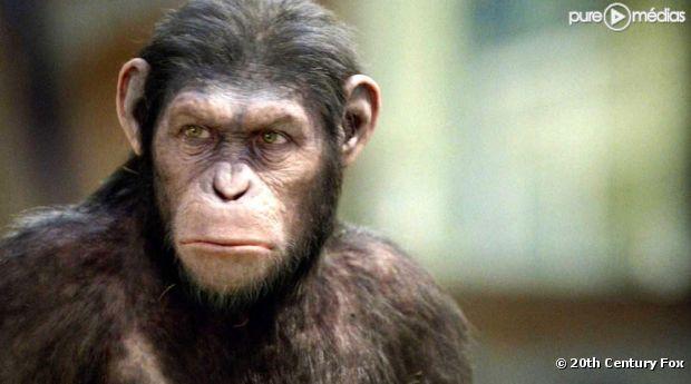http://static1.ozap.com/articles/7/43/57/37/@/4434994--la-planete-des-singes-les-origines-620x345-1.jpg
