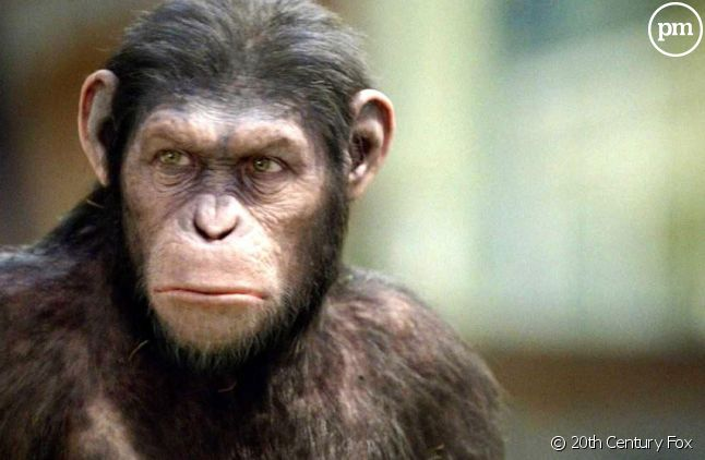 """""""La Planète des singes : les origines"""""""