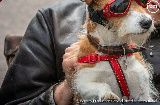 """Neil Dudgeon et Paddy le chien dans """"Inspecteur Barnaby"""""""