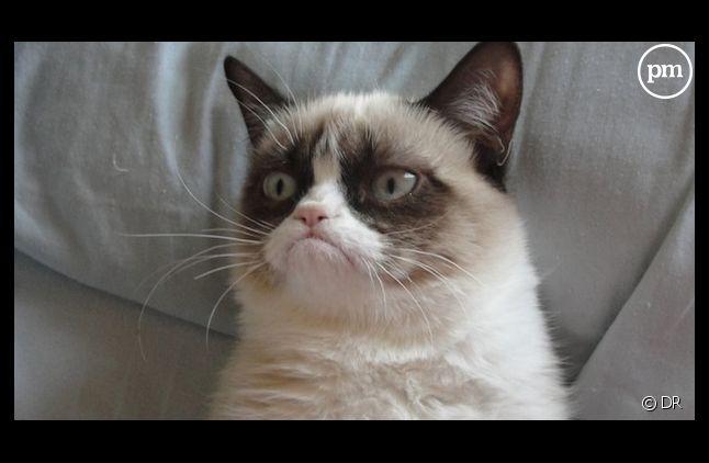 Grumpy Cat va faire l'objet d'un film !