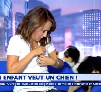 La chienne de Christophe Beaugrand perturbe la...