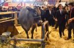 """Salon de l'Agriculture : La Une de """"20 Minutes"""" truffée de jeux de mots animaliers"""