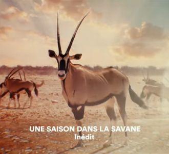 Bande-annonce de 'Une saison dans la savane'