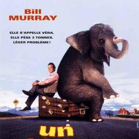 Un Elephant Sur Les Bras